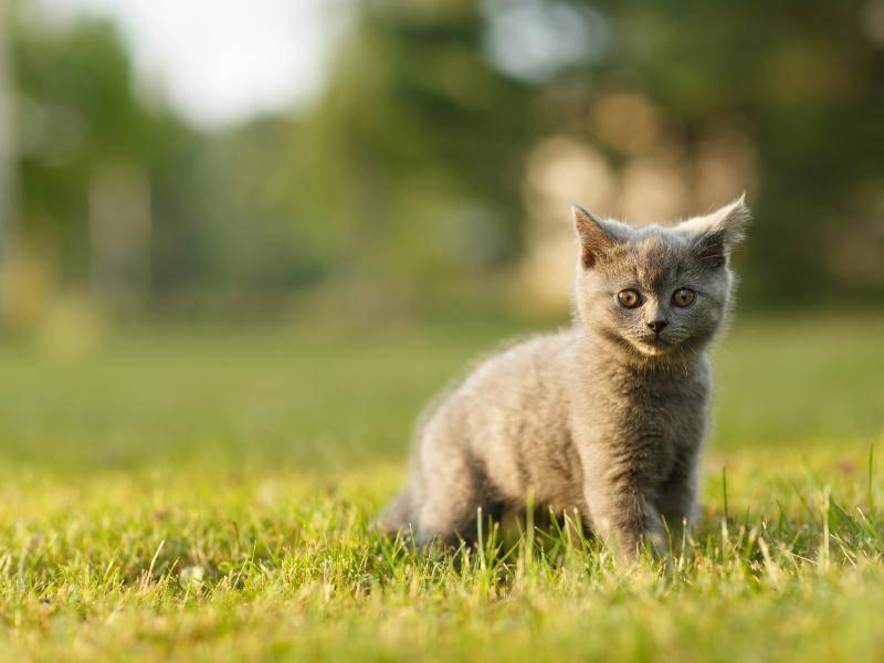 Huch, beim Spaziergang ertappt – Bild: Shutterstock / Canon Boy
