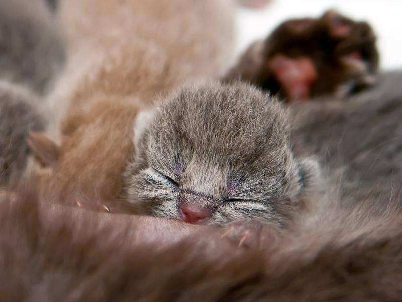 Kätzchen an der Milchbar. Guten Appetit! – Bild: Shutterstock / Anna Lurye