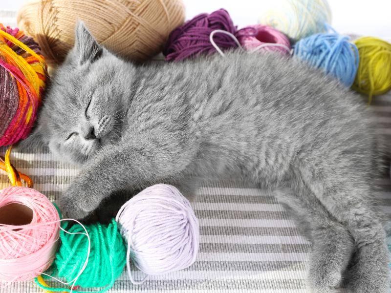 """""""Diese Wolle ist so flauschig und zart!"""" – Bild: Shutterstock / Africa Studio"""