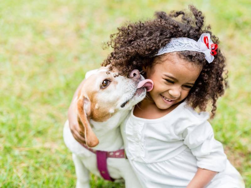 Hundeküsse stärken die Mensch-Hund-Beziehung – Shutterstock / Andresr