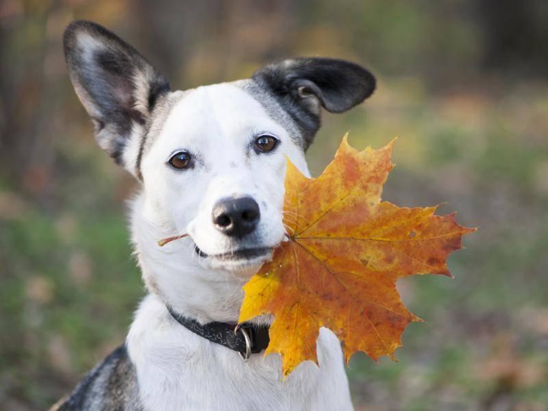 Schön, dieses Laub im Herbst! – Bild: Shutterstock / Iryna Dobrovynska