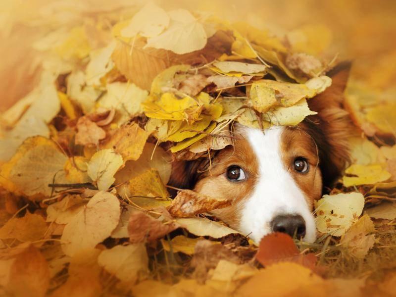 Dieses kleine Kerlchen liebt es, sich im Herbst unter Blättern zu verstecken – Bild: Shutterstock / Ksenia Raykova