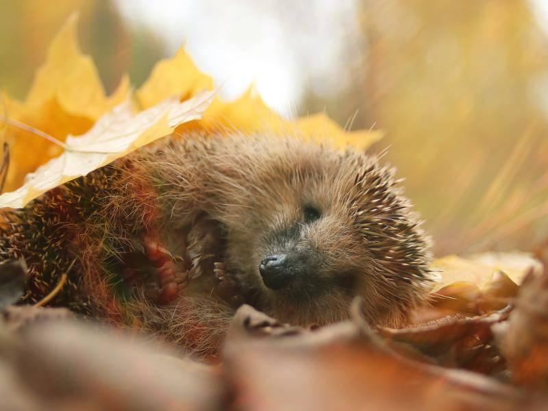 Schlafen funktioniert unter einem Laubblatt auch wunderbar – Bild: Shutterstock / Kichigin