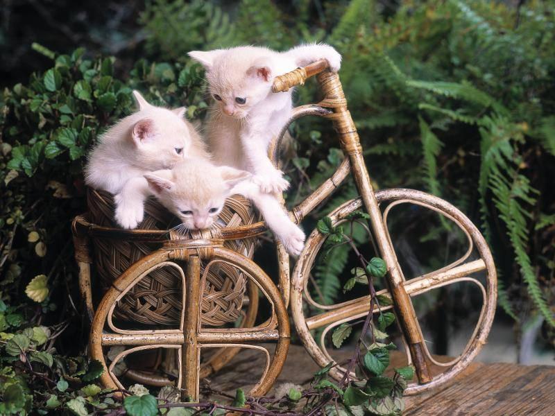 """""""Ihr tretet in die Pedale und ich lenke, alles klar?"""" Katzen und ihre verrückten Ideen! – Bild: Shutterstock / Tony Bowler"""