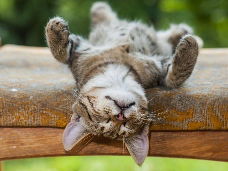 """""""Einatmen, austamen, ich bin ganz entspannt!"""" – Bild: Shutterstock / Vinogradov Illya"""