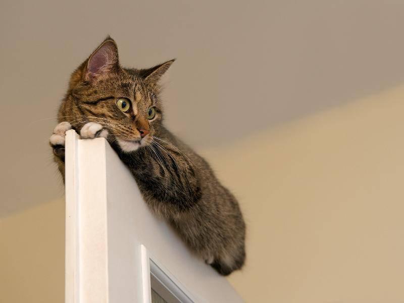 """""""Du willst die Tür schließen? Tja, Pech gehabt!"""" – Bild: Shutterstock / Renata Apanaviciene"""
