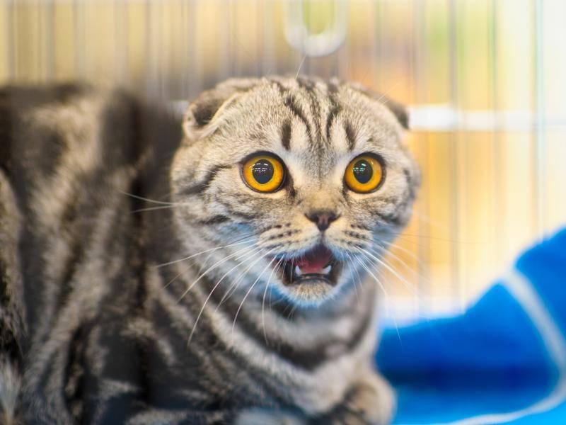 """""""Schockschwerenot, ich war doch mit dem Kater von nebenan verabredet!"""" – Bild: Shutterstock / The Len"""