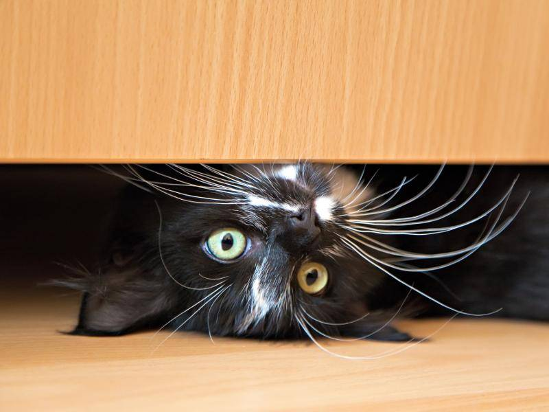 """""""Mein neues Versteck! Schau mal!"""" – Bild: Shutterstock / Alena Stalmashonak"""