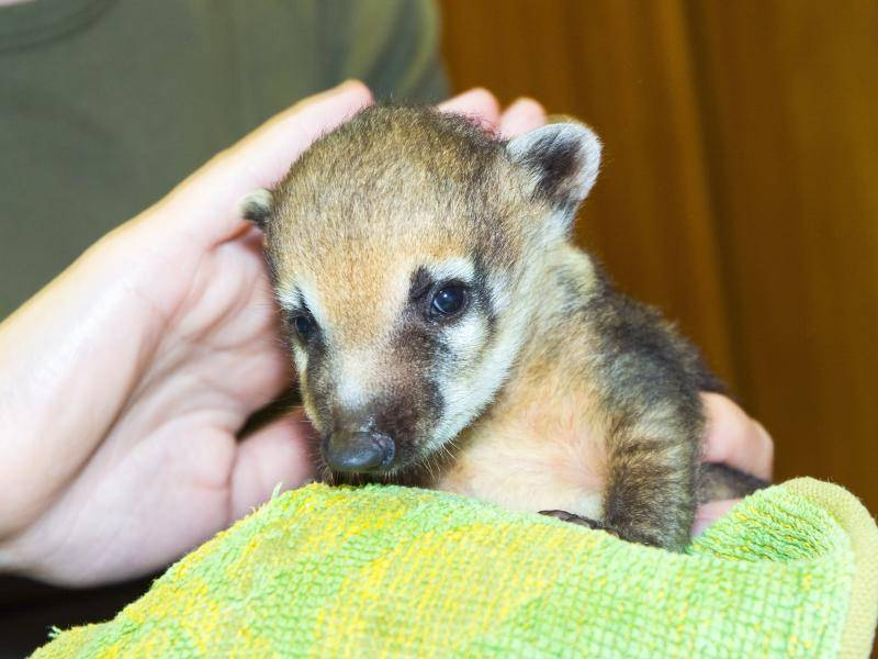 Zum Knuddeln, dieses kleine Tierbaby! – Shutterstock / belizar