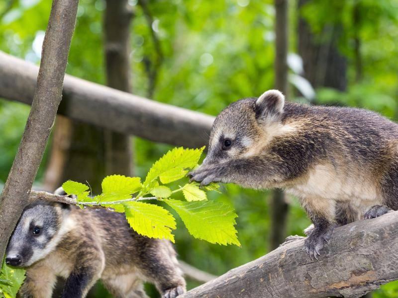 """""""Guck mal, da hinten steht Mama!"""" – Bild: Shutterstock / belizar"""