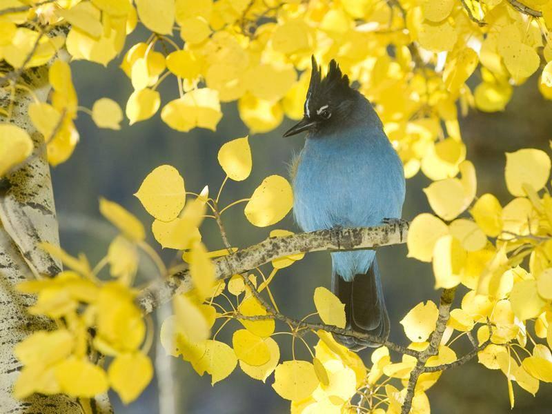 Auf Wiedersehen, wünscht dieser zauberhafte Diademhäher – Shutterstock / Tony Campbell