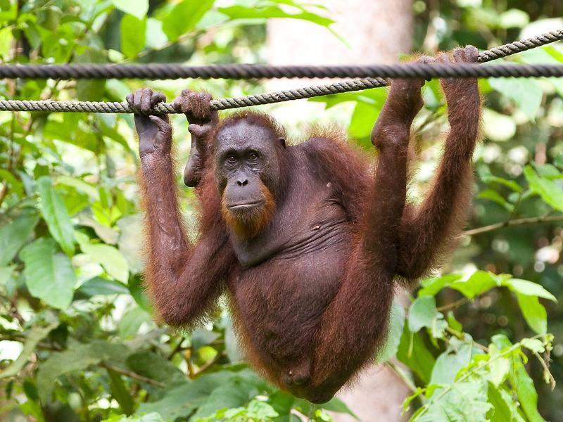 Abhängen in schwindelerregender Höhe ist für dieses Tier kein Problem – Bild: Shutterstock / Natursports