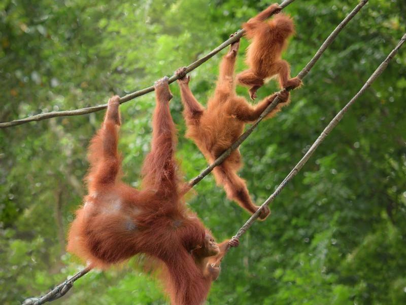 Ob groß oder klein, diese Tierchen sind meisterliche Akrobaten – Bild: Shutterstock / Anna Kucherova