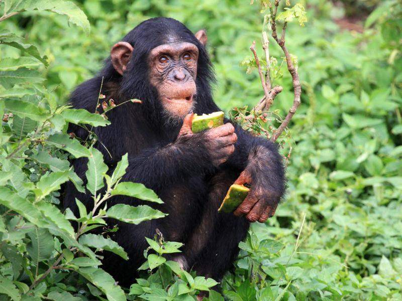 Ihre Nahrung suchen sie auf Bäumen und am Boden – Bild: Shutterstock / Sam DCruz