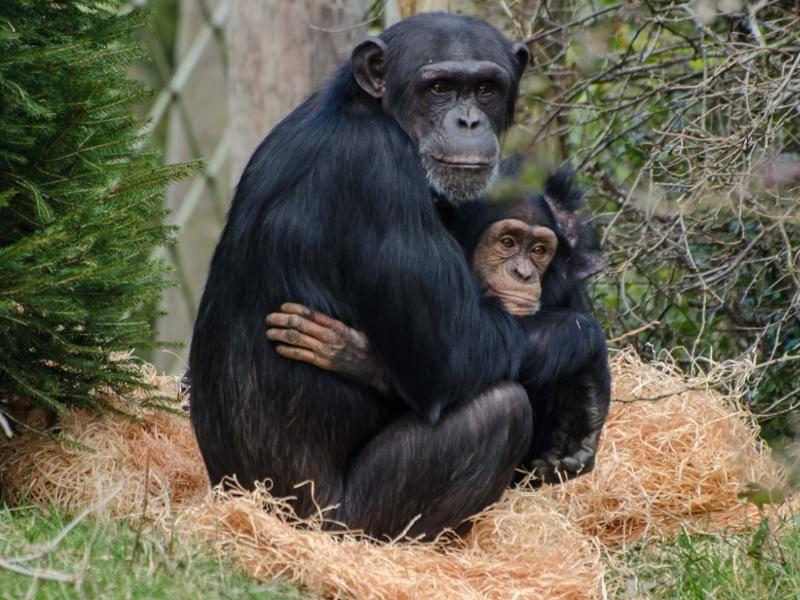 Süß, wie Eltern ihre Babys beschützen! – Bild: Shutterstock / Hill2k