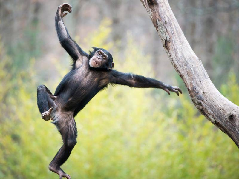 Huiiiiii! Tschüüüss! – Bild: Shutterstock / Abeselom Zerit