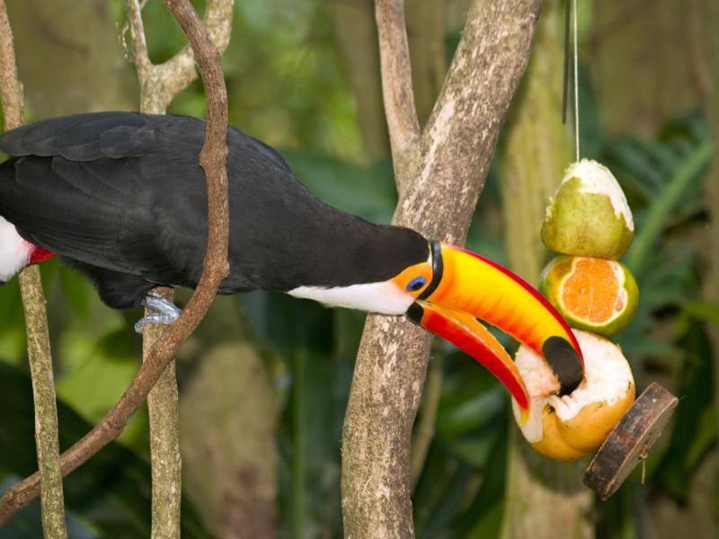 """""""Yummy, so eine köstliche Frucht!"""" – Bild: Shutterstock / Yenyu Shih"""