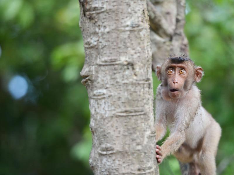 """""""Oooh, soo viele Bananen nur für mich!"""" – Bild: Shutterstock / artpixelgraphy Studio"""