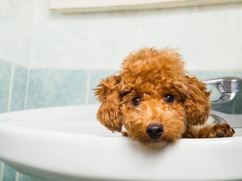 """""""Du wolltest dir die Zähne putzen? Das geht jetzt nicht!"""" – Bild: Shutterstock / ThamKC"""