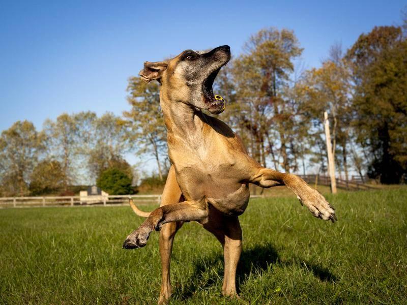"""Oh nein, Ball verfehlt!"" – Bild: Shutterstock / Dmussman"