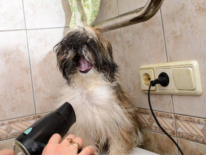 Und gaaanz wichtig nach dem Besuch im Bad: Fell föhnen! – Bild: Shutterstock / osArt