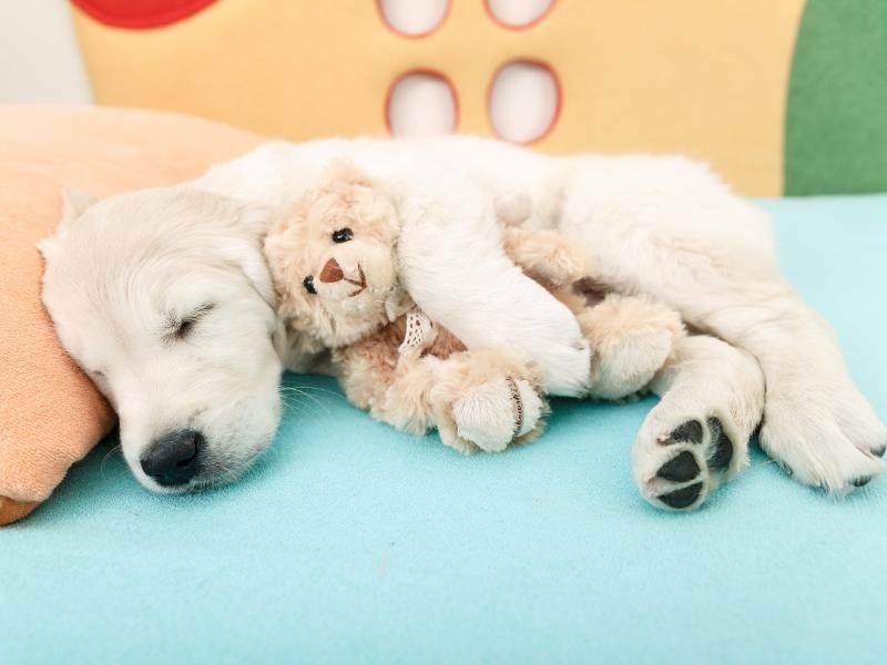 """""""Ich lasse dich nie mehr los!"""" – Bild: Shutterstock / NotarYES"""