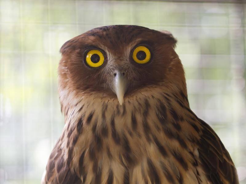 """""""Oh, ein Fotoapparat. Aber meine Federn sitzen doch gar nicht richtig!"""" – Bild: Shutterstock / DAOphotography"""