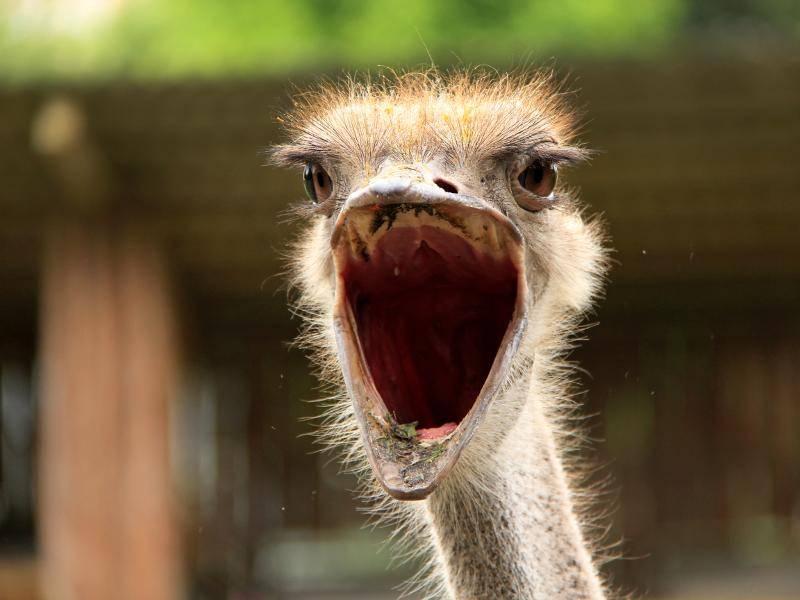 """""""Haaaaalt! Stoppppppp! Das ist mein Gehege!"""" – Bild: Shutterstock / DDCoral"""