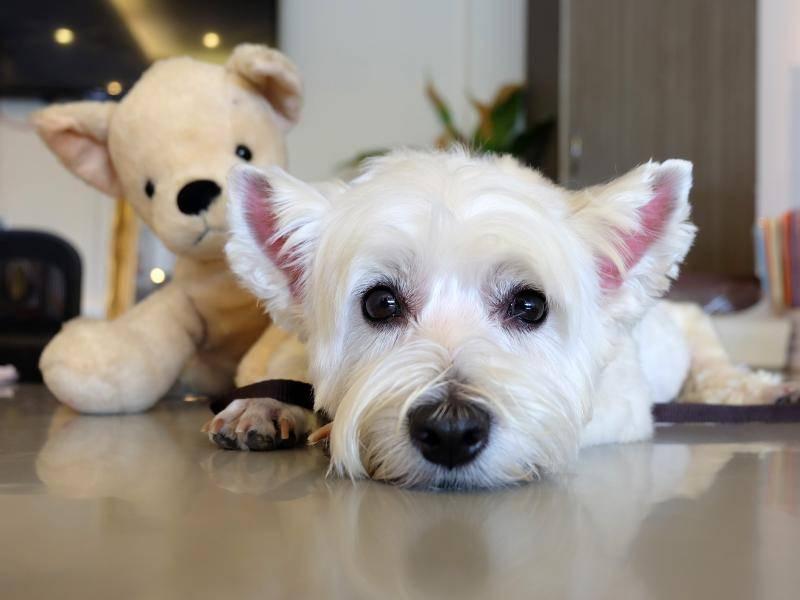 Tier und Kuschelbär schauen in die Kamera – Bild: Shutterstock / Pornpawee Th
