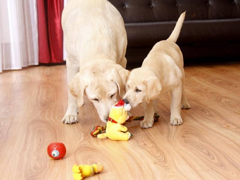 Wer sich den gelben Bären zuerst schnappen wird? – Bild: Shutterstock / lenetstan