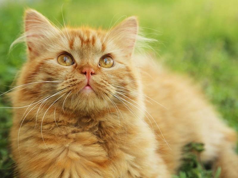 """Platz 2: Auch Disney hat es mit """"Simba"""" unter die beliebtesten Katzennamen geschafft – Shutterstock / 5 second Studio"""