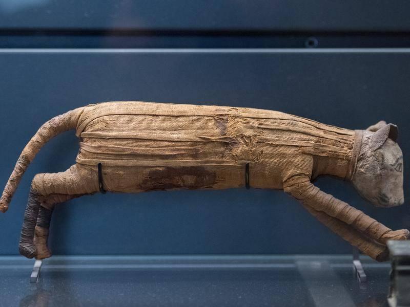Die alten Ägypter verehrten Katzen so sehr, dass sie die Samtpfoten wie Pharaone auch zu Mumien machten – Shutterstock / Andrea Izzotti
