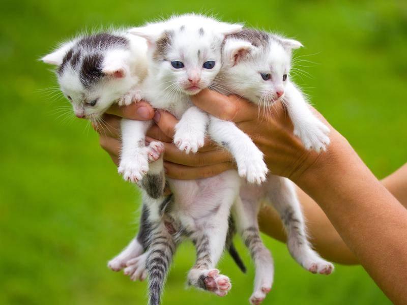 Dreifach süß ist diese Handvoll Katzenbabys! - Bild: Shutterstock/Alekcey
