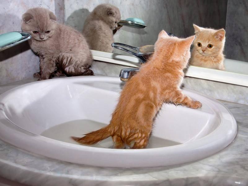 Nanu, wer ist denn dieses Kätzchen da im Spiegel? - Bild: Shutterstock/vvvita