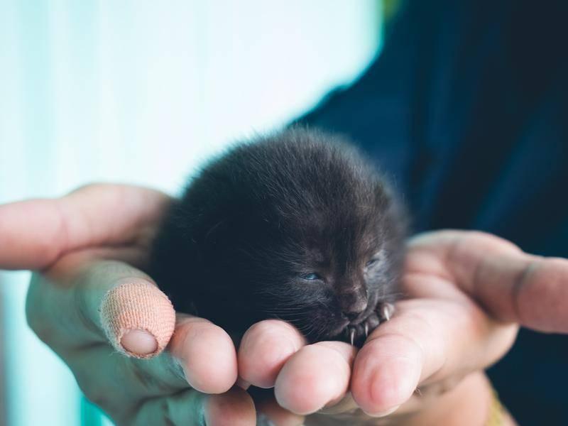 So süß: Ein winziges Katzenbaby schlummert in der Hand - Bild: Shutterstock/chanchai plongern
