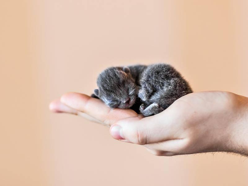 Nicht ganz eine handvoll: Dieses Mini-Kätzchen hat gerade erst das Licht der Welt erblickt - Bild: Shutterstock_ Tatiana Chekryzhova