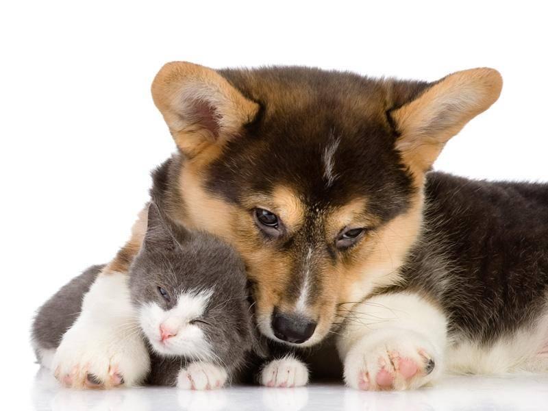 ... weil Corgis treue Freunde sind und manchmal sogar babysitten — Bild: Shutterstock / Ermolaev Alexander