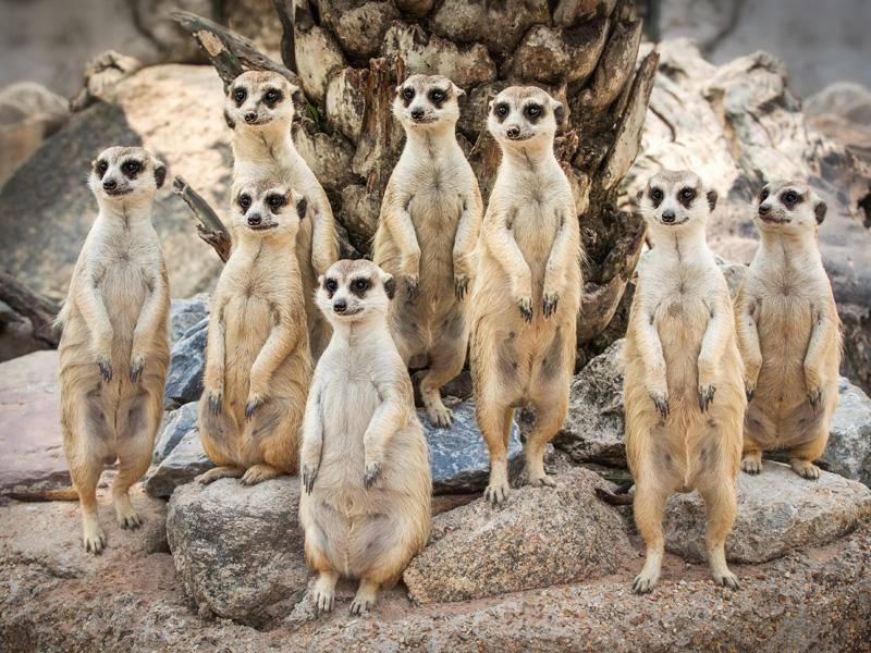 Was für ein hübsches Familienporträt! – Bild: Shutterstock / anekoho