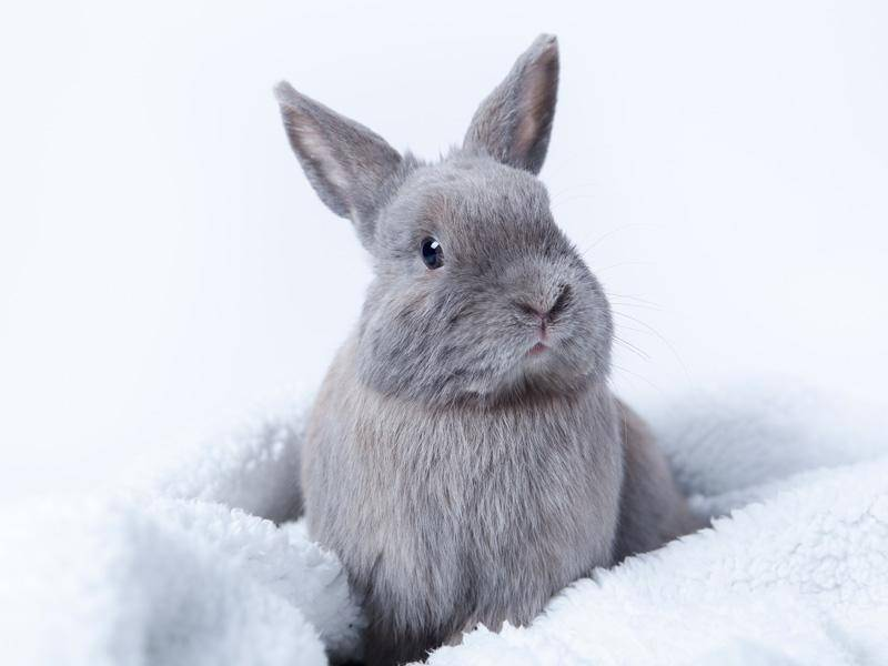 Kuckuck! Wer lugt denn da aus der Decke hervor? Ein kleines, graues Häschen! Bild: Shutterstock / Ska_Zka