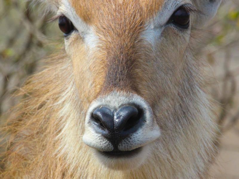 Eine Nase geformt wie ein Herz: Süße Laune der Natur — Bild: Shutterstock / #Jurgens Potgieter