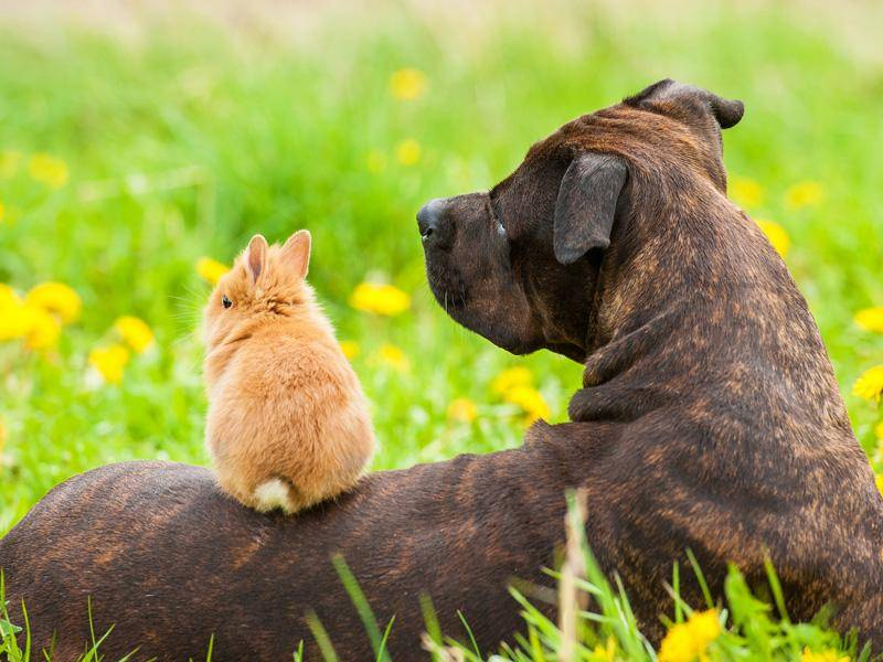 Pass gut auf das kleine Häschen auf, liebe Hundemutter! – Bild: Shutterstock / Grigorita Ko