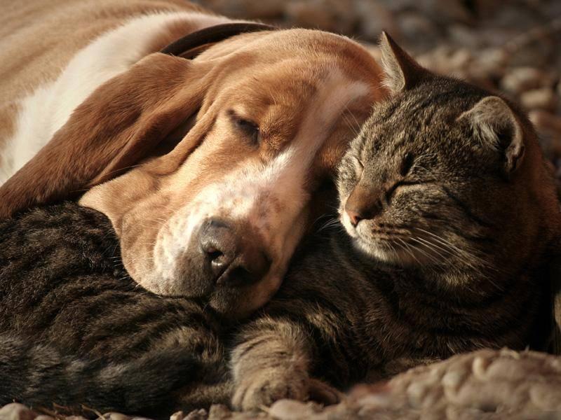 Flauschig und sehr süß: Dieses ungleiche Duo hält ein kleines Nickerchen - Bild: Shutterstock / Pap Kutasi Szilvia