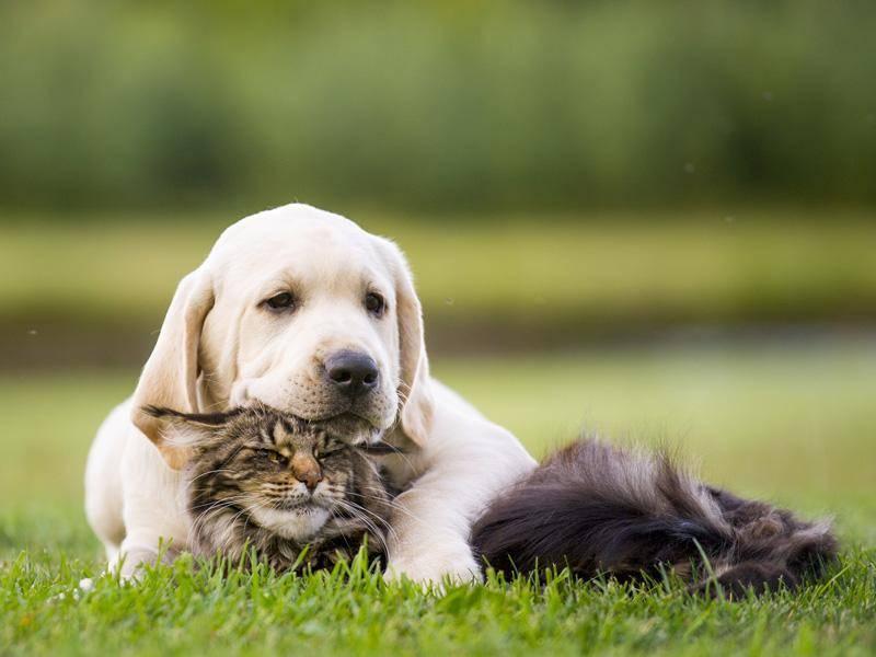 Und auch in diesem Fall scheinen Hund und Katze unzertrennlich zu sein. Herzallerliebst! - Bild. Shutterstock / Okeanas