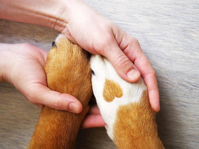 Herziger Hund mit Herzchen im Fell - Bild: Shutterstock / savitskaya iryna
