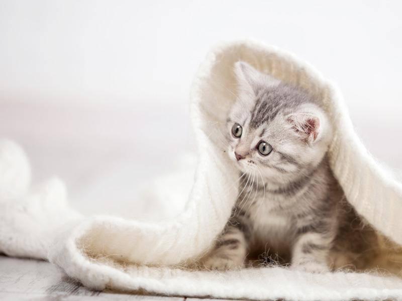 """""""So schön kuschelig!"""", denkt sich wohl diese süße Samtpfote – Bild: Shutterstock / Gladskikh Tatiana"""