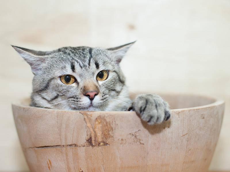 Glückskätzchen in der Schüssel: Wovon träumst du, Katzenbaby? — Bild: Shutterstock / Black Duck Style