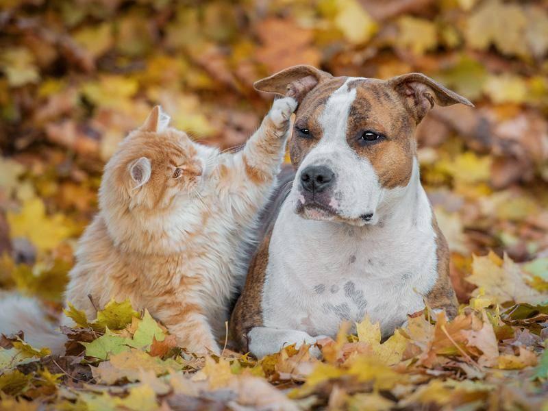 Es geht auch andersrum, wie diese süßen beweisen: Katze tätschelt Hund liebevoll den Kopf – Bild: Shutterstock / Grigorita Ko