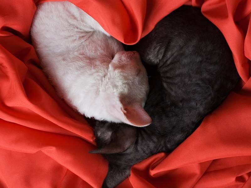Herzallerliebste Freunde, diese zwei schönen Kätzchen — Bild: Shutterstock / Oleg Kozlov