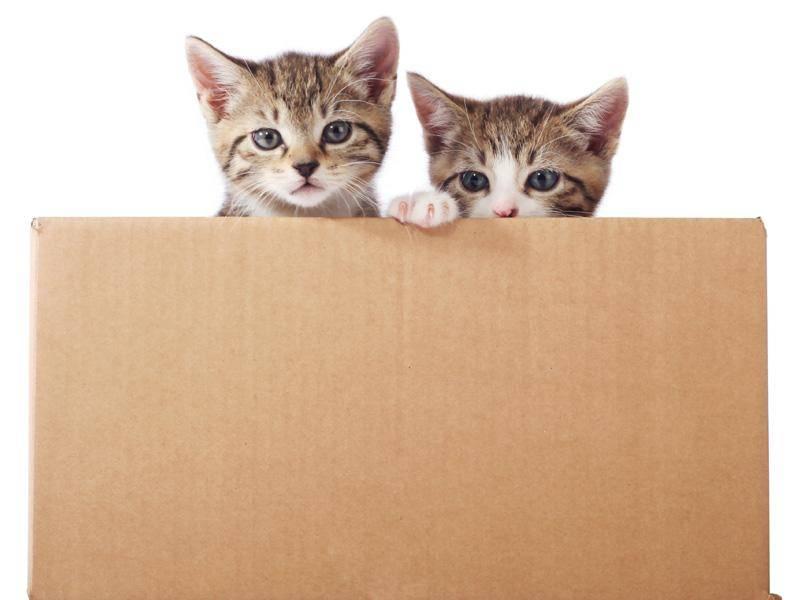 ... weil nur Katzenfreunde verstehen, warum Kartons unheimlich wichtig sind — Bild: Shutterstock / Foonia