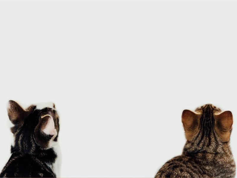 ... weil Katzenfreunde nach oben gucken, wenn man ihnen etwas zeigen will — Bild: Shutterstock / PNPImages